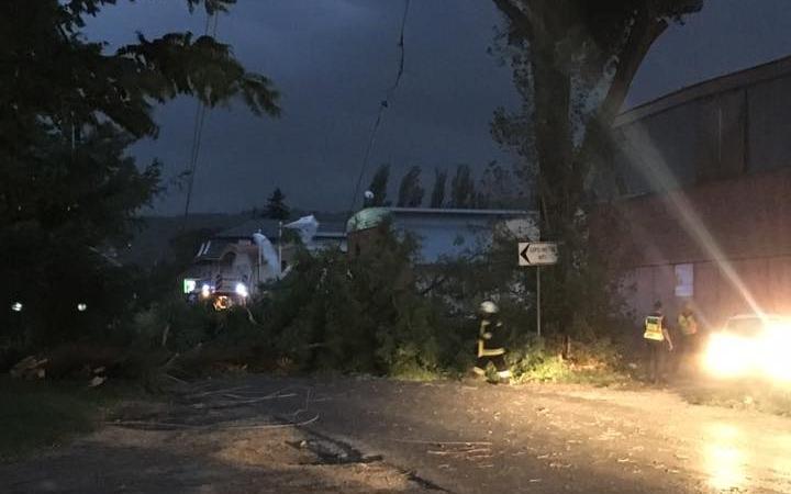 Útra dőlt egy óriási kitört fa a Táti úton